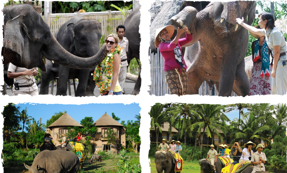 BALI ELEPHANT SAFARI RIDE